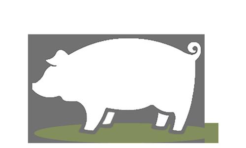 GAP Species: Pigs