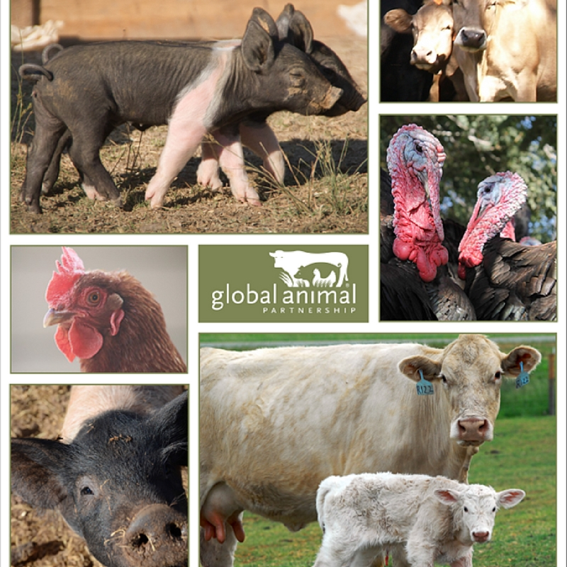 Spreading animal welfare: Standards transforming animal agriculture worldwide