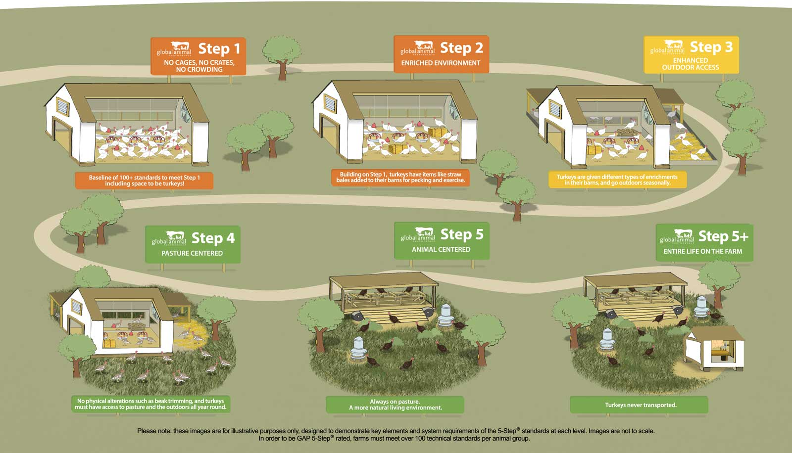Turkey Farm Animal Welfare Steps