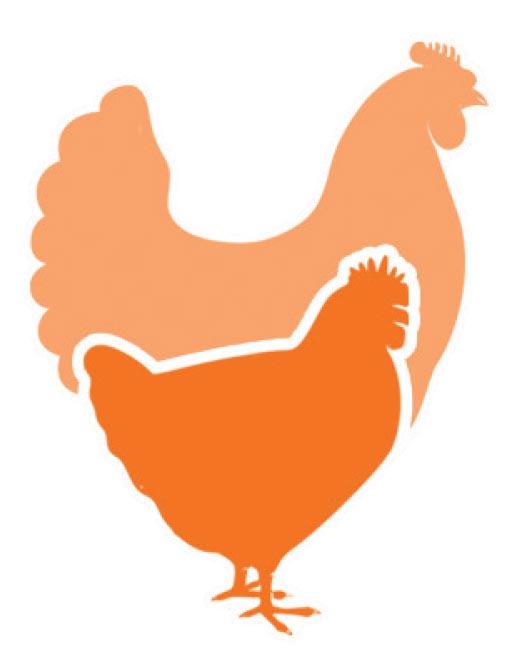 GAP Higher Welfare Chicken Initiative