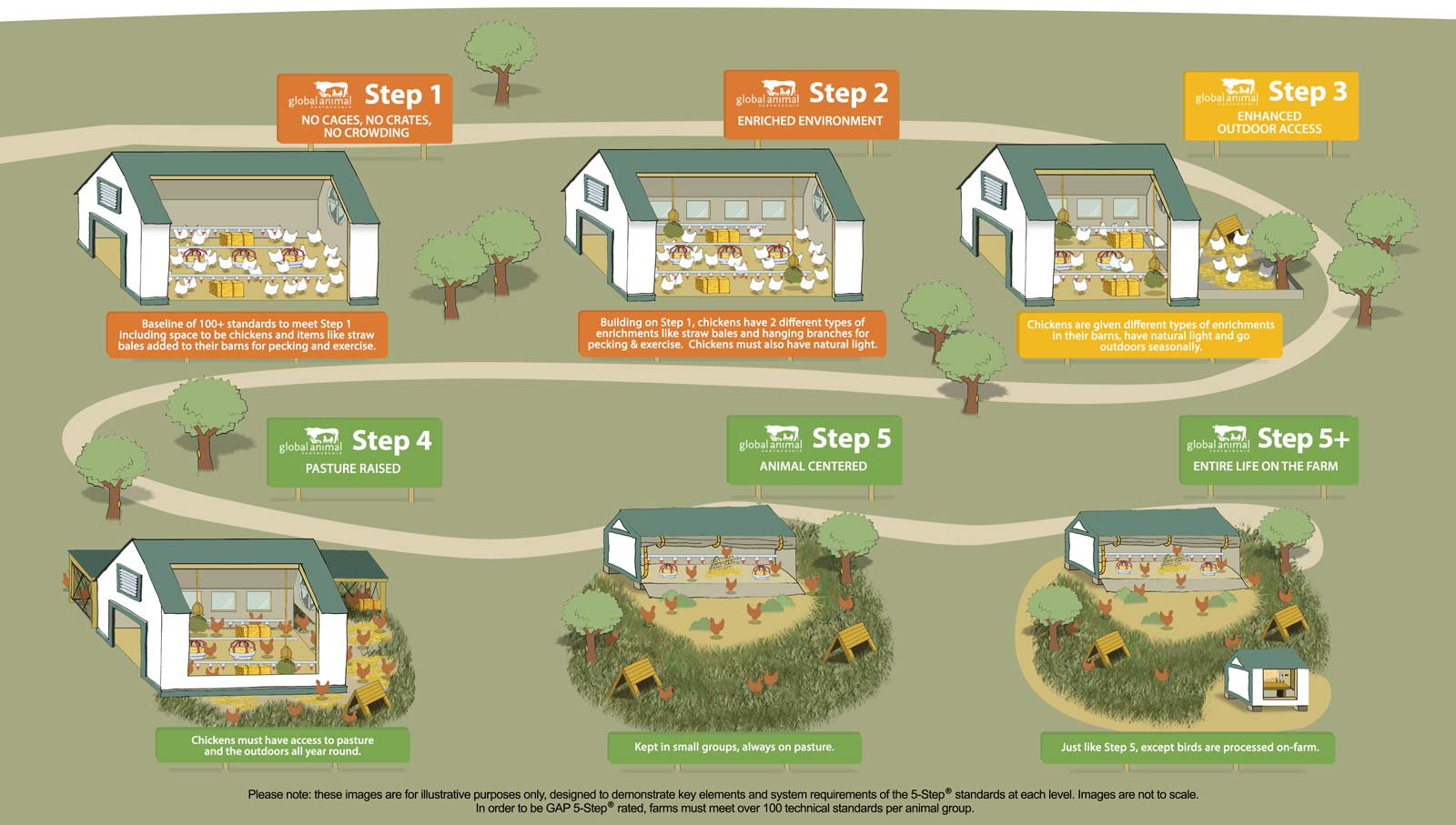 Steps and Standards for Broiler Chickens Farm Animal Welfare