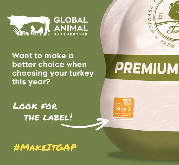 MakeItGAP Turkey Guide