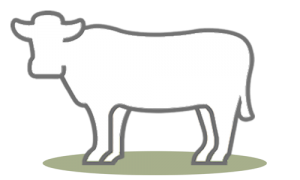 G.A.P. Species: Beef Cattle