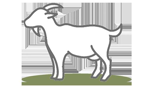 G.A.P. Species: Goat