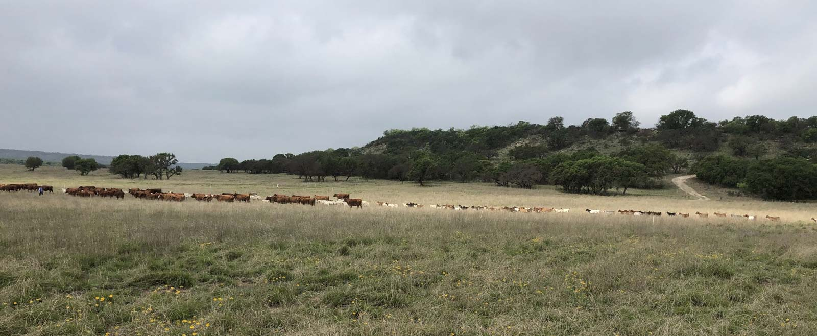 On the Move: Achieving Symbiosis in Cattle Ranching