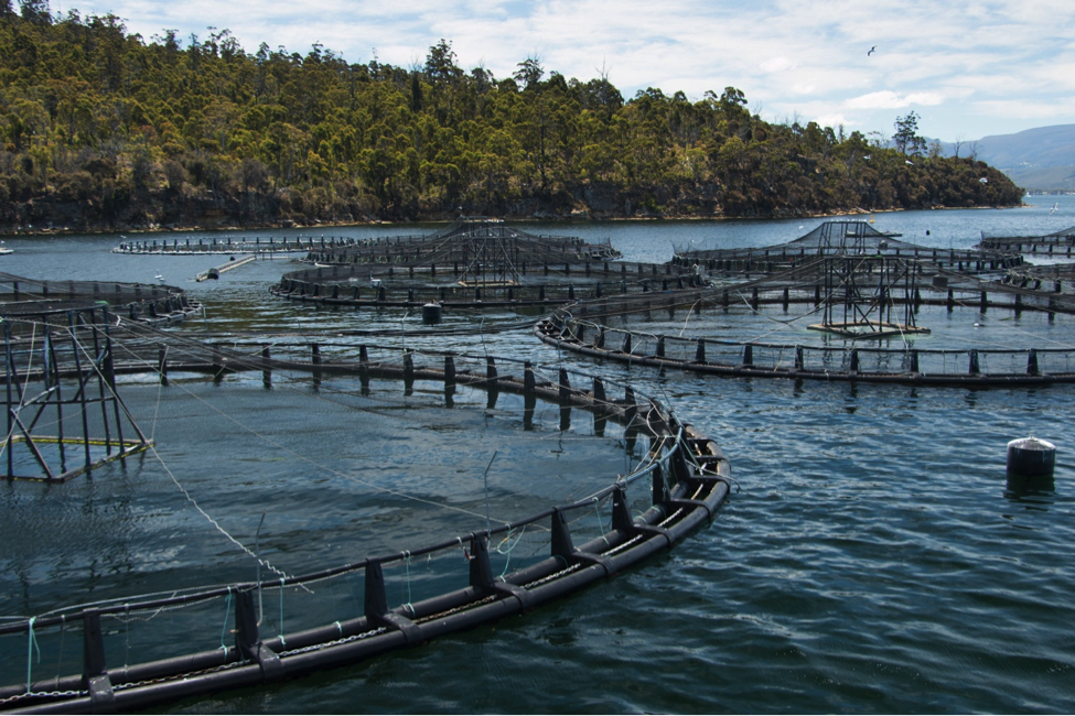 GAP Dives into Farmed Fish Welfare