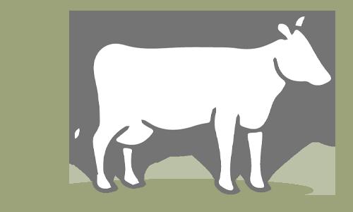 G.A.P. Species: Dairy Cattle